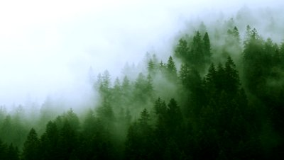 misty-mountain-forest