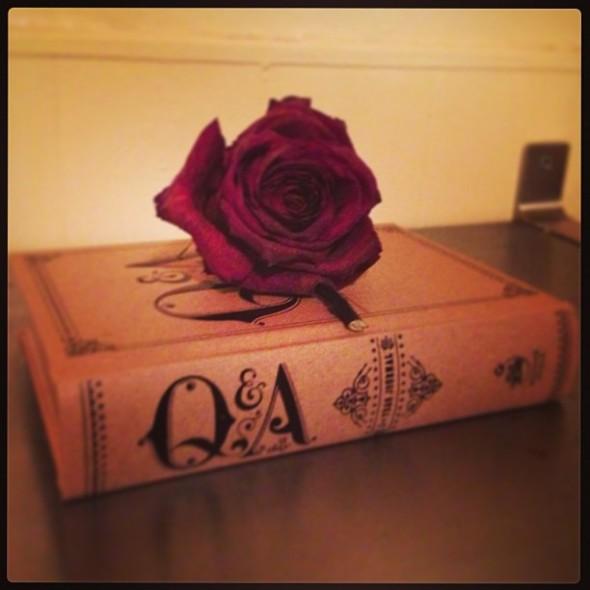 rose_q&a