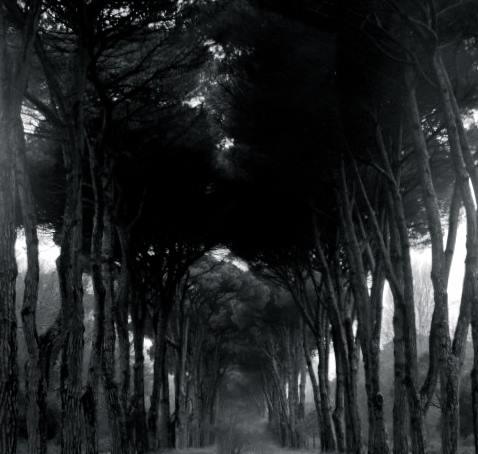 trees_pisa