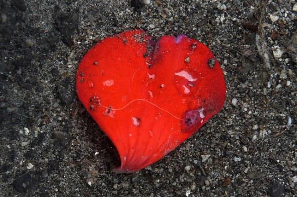 heart_Bizarre del Bizarrio:Flickr